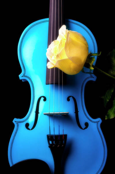 Wall Art - Photograph - Blue Violin And White Rose by Garry Gay