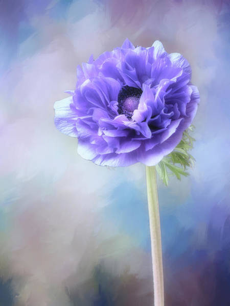 Photograph - Blue Windflower by Usha Peddamatham