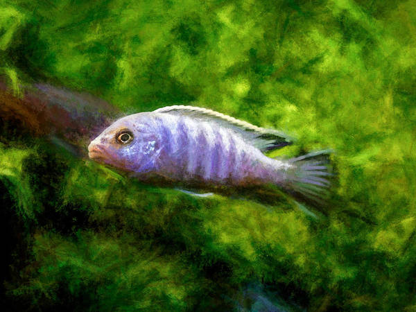 Digital Art - Blue Zebra African Cichlid by Don Northup