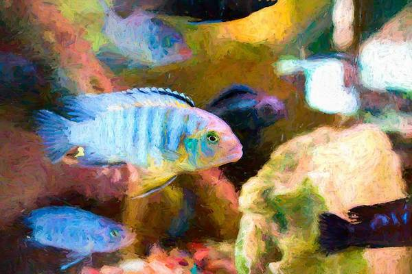 Digital Art - Blue Zebra Lake Malawi Hopper by Don Northup