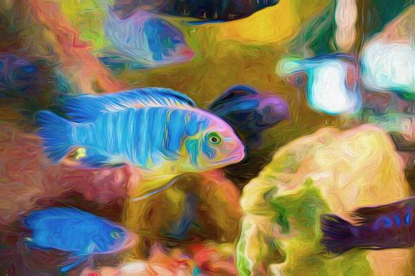 Digital Art - Blue Zebra Lake Malawi Swirly Art by Don Northup