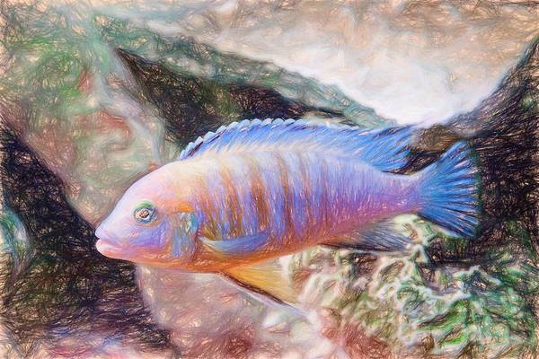 Digital Art - Blue Zebra Limestone Colored Pencil by Don Northup