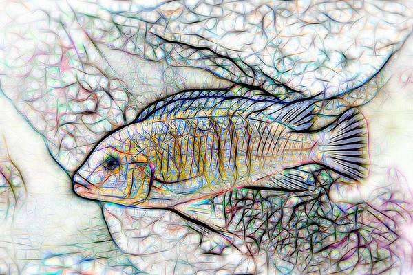 Digital Art - Blue Zebra Limestone Line Art by Don Northup