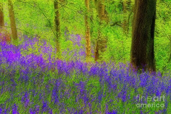 Photograph - Bluebell Art by Martyn Arnold