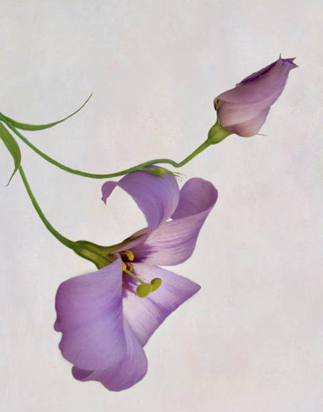 Wall Art - Photograph - Bluebell Blossom And Bud  by David and Carol Kelly
