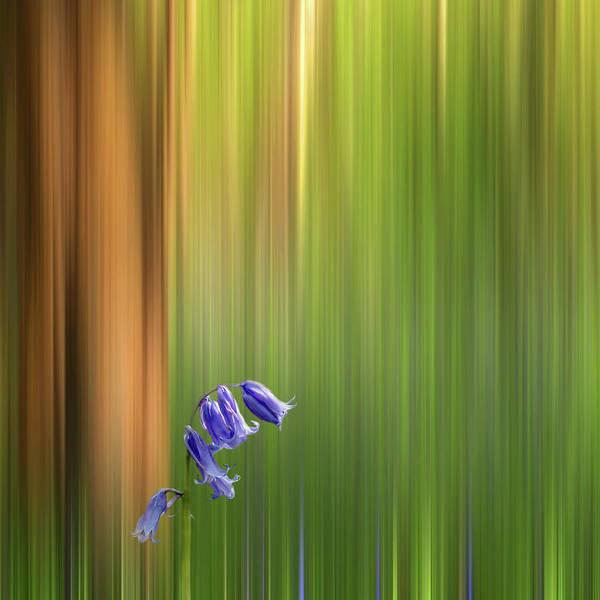 Photograph - Bluebell Wood Dream by Gill Billington