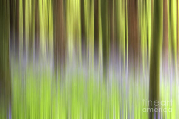 Wall Art - Photograph - Bluebell Woods by John Edwards