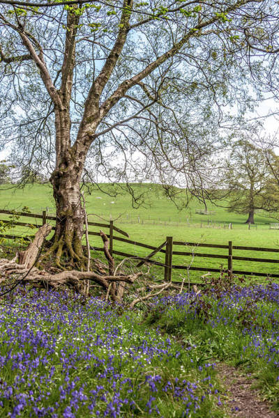 Wall Art - Photograph - Bluebells And Pasture by W Chris Fooshee