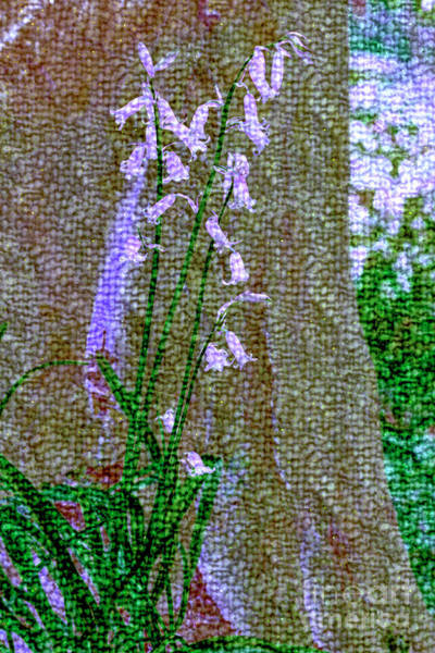 Photograph - Bluebells By A Tree Stump by Nigel Dudson
