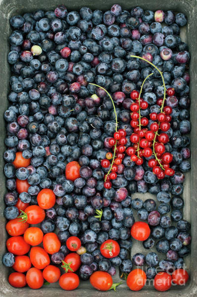 Photograph - Blueberries Redcurrants And Tomatoes by Tim Gainey