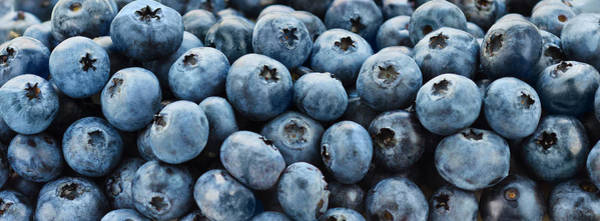 Wall Art - Photograph - Blueberries by Tetra Images