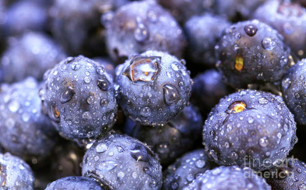 Photograph - Blueberry Details by John Rizzuto