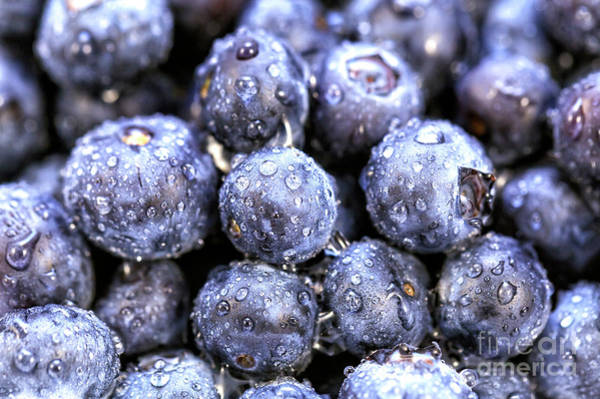 Photograph - Blueberry Party by John Rizzuto