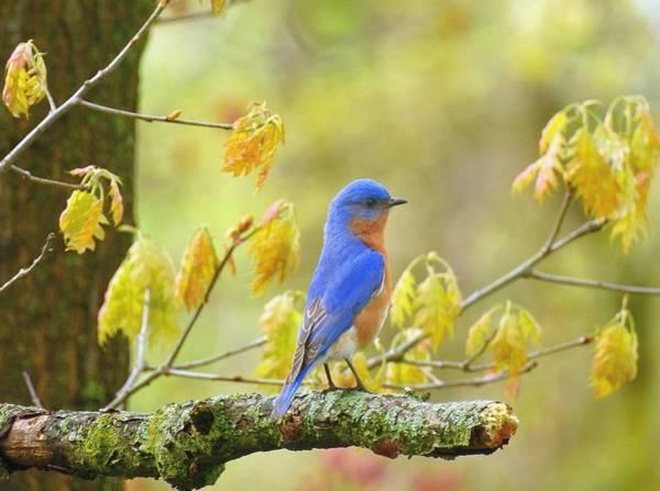 Wall Art - Photograph - Bluebird Alert by Carmen Macuga
