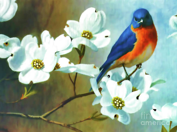 Digital Art - Bluebird In The Dogwood by D Hackett