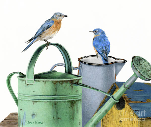 Eastern Bluebird Painting - Bluebirds At The Potting Shed by Sarah Batalka