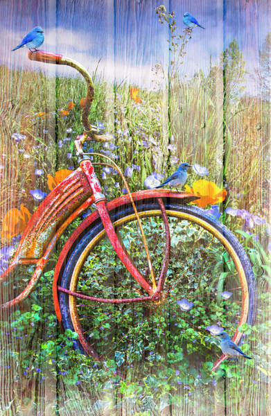 Photograph - Bluebirds On A Bicycle by Debra and Dave Vanderlaan