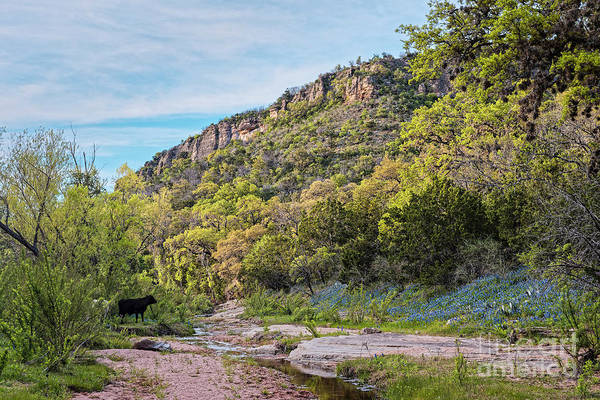 Wall Art - Photograph - Bluebonnet Paradise In Willow City Loop - Fredericksburg Llano Texas Hill Country by Silvio Ligutti