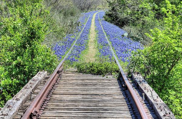 Photograph - Bluebonnet Path by JC Findley
