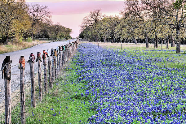 Photograph - Bluebonnets And Cowboy Boots by JC Findley
