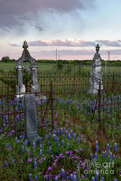 Photograph - Bluebonnets And Headstones by Paul Quinn