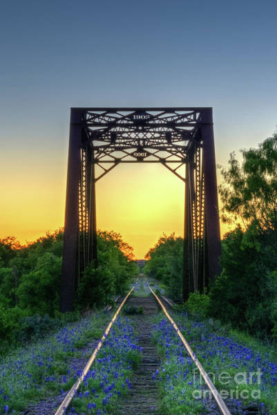 Photograph - Bluebonnets On The Abandoned Railroad by Paul Quinn