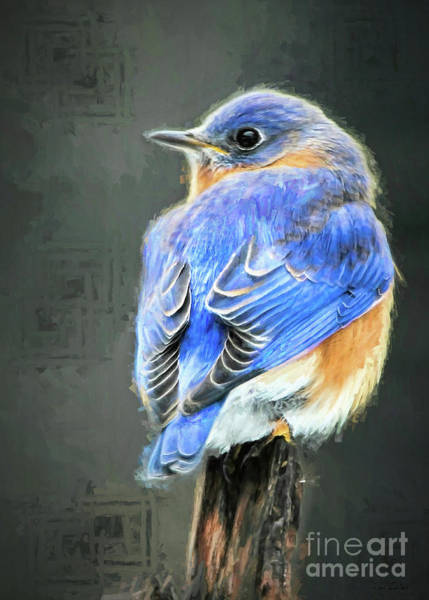 Eastern Bluebird Painting - Bluer Than Blue by Tina LeCour