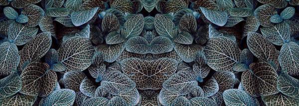 Wall Art - Photograph - Bluey Variant by Wayne Sherriff