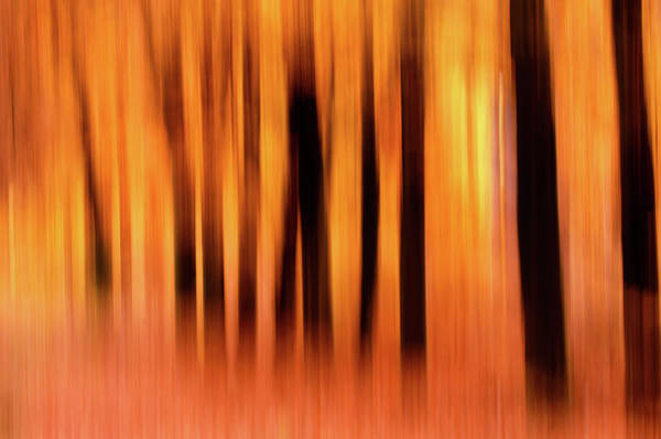 Wall Art - Photograph - Blurred Lines - Autummn Impressions by Roeselien Raimond