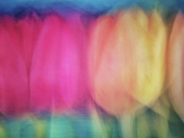 Photograph - Blurred Tulip Flower Like Abstract Background With Pinks, Yellows, Greens And Peach Colors by Teri Virbickis