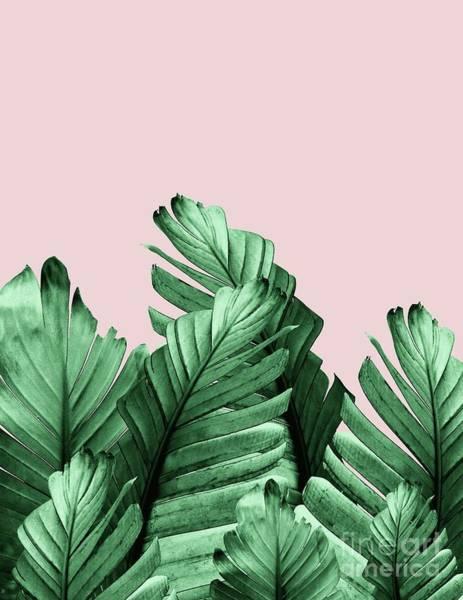 Banana Leaf Mixed Media - Blush Banana Leaves Dream #3 #tropical #decor #art by Anitas and Bellas Art