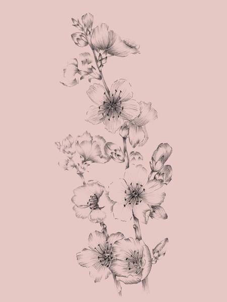 Wall Art - Mixed Media - Blush Pink Flower Drawing I by Naxart Studio