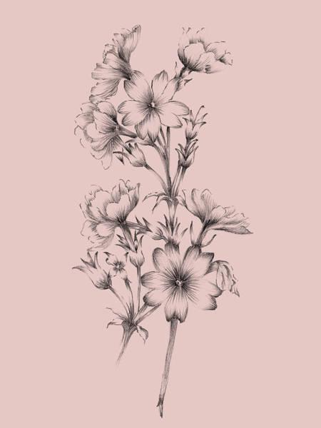 Wall Art - Mixed Media - Blush Pink Flower Drawing II by Naxart Studio