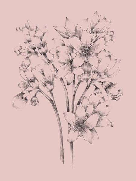 Wall Art - Mixed Media - Blush Pink Flower Drawing by Naxart Studio