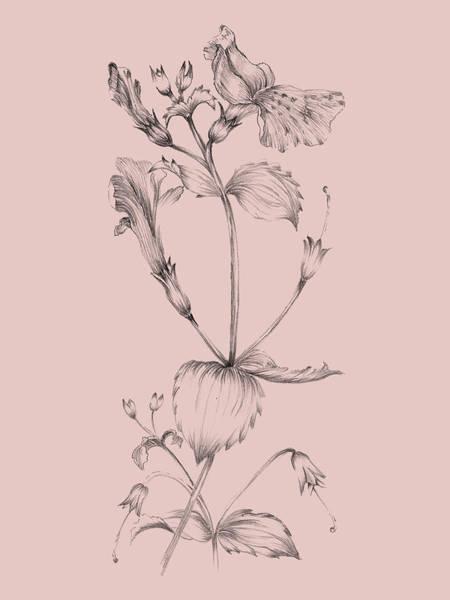 Wall Art - Mixed Media - Blush Pink Flower I by Naxart Studio