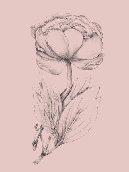 Wall Art - Mixed Media - Blush Pink Flower Illustration II by Naxart Studio