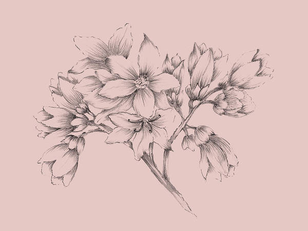 Wall Art - Mixed Media - Blush Pink Flower Illustration by Naxart Studio