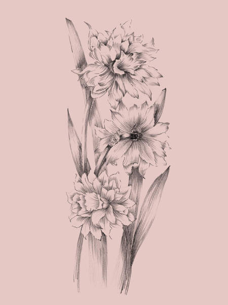 Wall Art - Mixed Media - Blush Pink Flower Sketch 3 by Naxart Studio