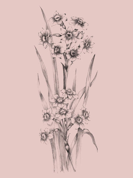 Wall Art - Mixed Media - Blush Pink Flower Sketch I by Naxart Studio