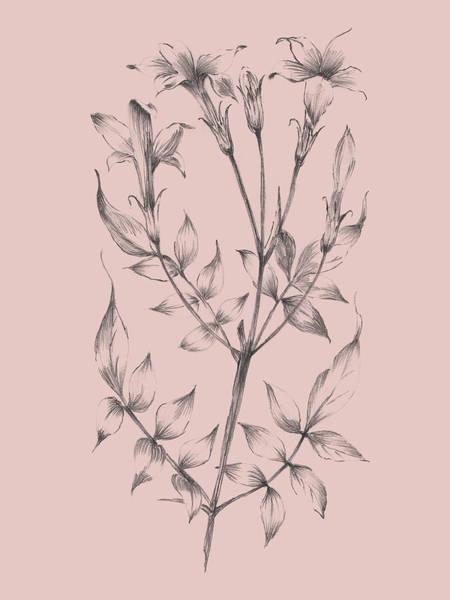 Wall Art - Mixed Media - Blush Pink Flower Sketch II by Naxart Studio