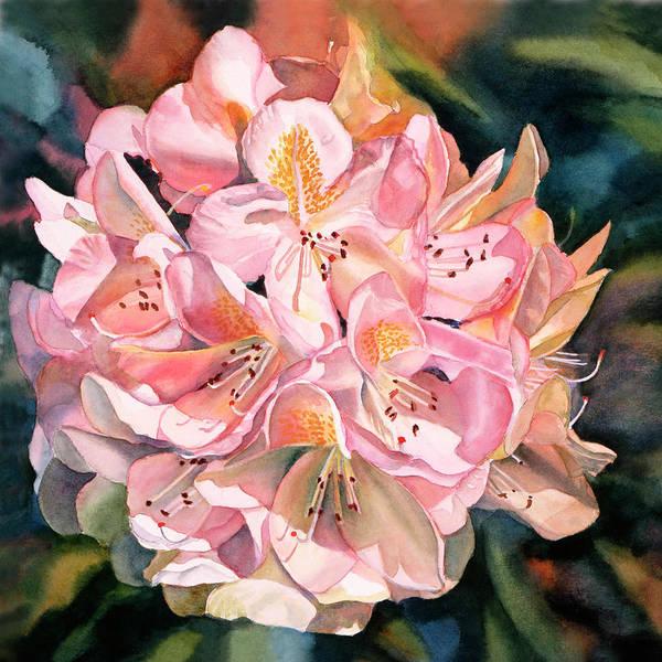 Blushing Pink Rhododendron  Art Print