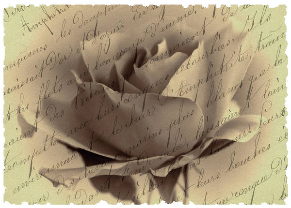 Photograph - Blushing Rose by Cathy Kovarik