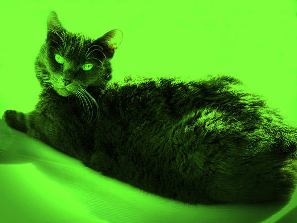 Photograph - Bluz In Green by Judy Kennedy