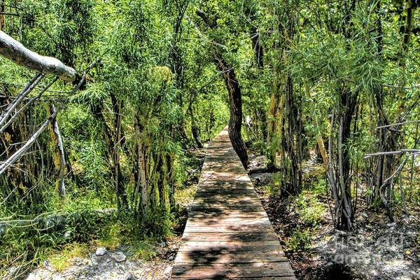 Photograph - Boardwalk Through The Jungle by Joe Lach