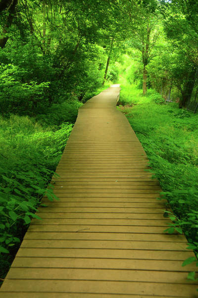 Photograph - Boardwalk To End/begin The Shenandoah Np Appalachian Trail by Raymond Salani III