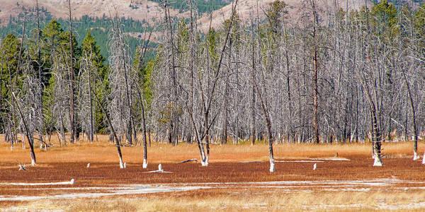 Photograph - Bobby Socks Trees by Steve Stuller