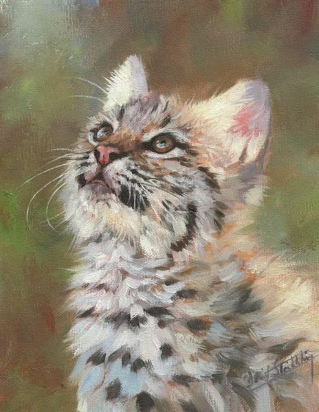Painting - Bobcat Kitten by David Stribbling