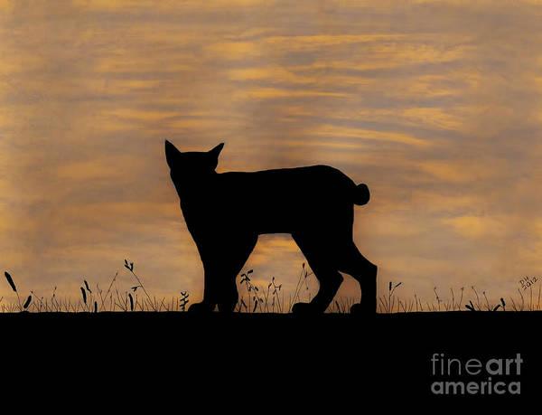Drawing - Bobcat - Sunset by D Hackett