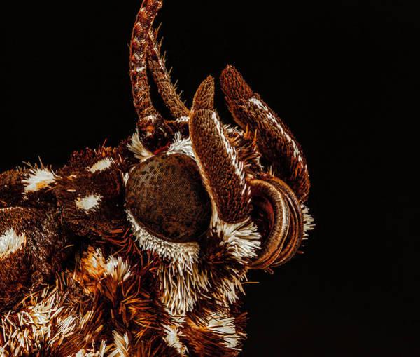 Photograph - Boisduval's Tiger Moth 4x by Gary Shepard