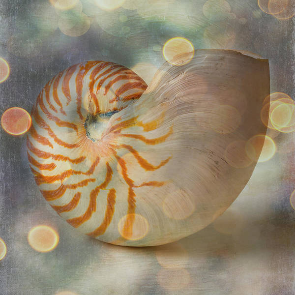 Wall Art - Photograph - Bokeh Nautilus Shell by Garry Gay